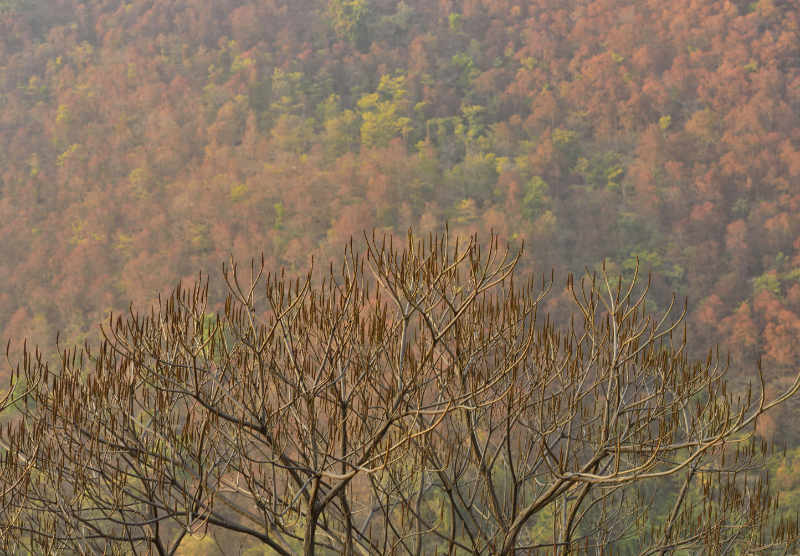 Autumn trees at Vyasghat